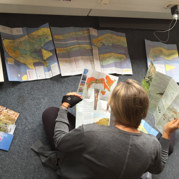 lisa mapping the process